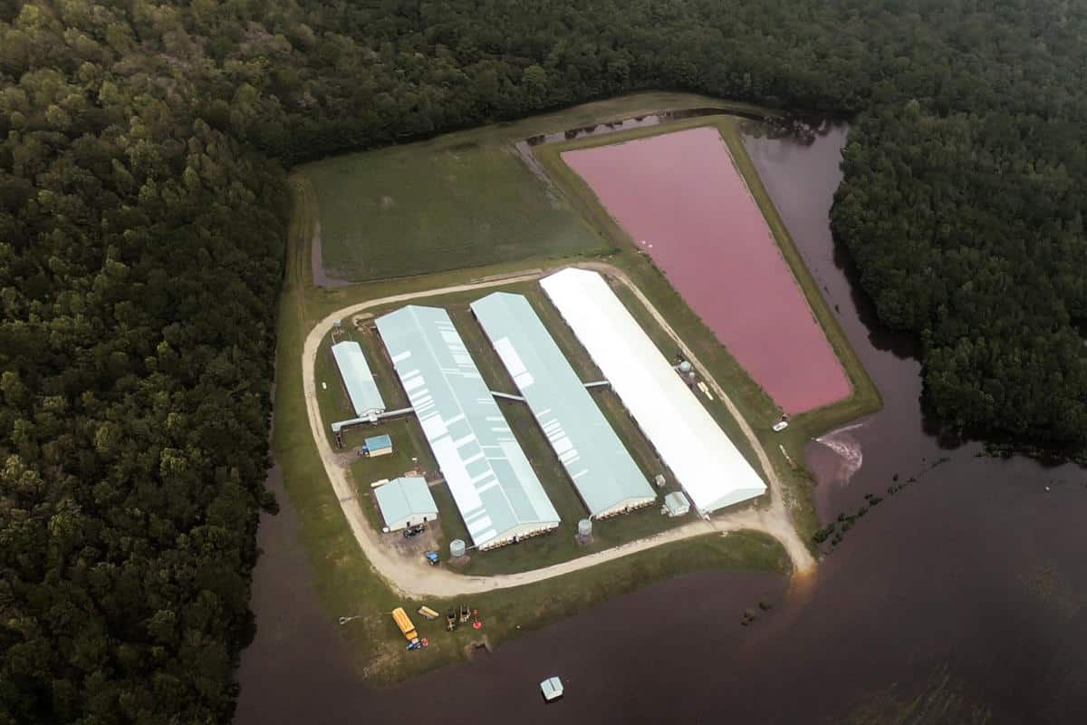 Pig waste lagoon adjacent to pig farm surrounded by water from hurricane flooding