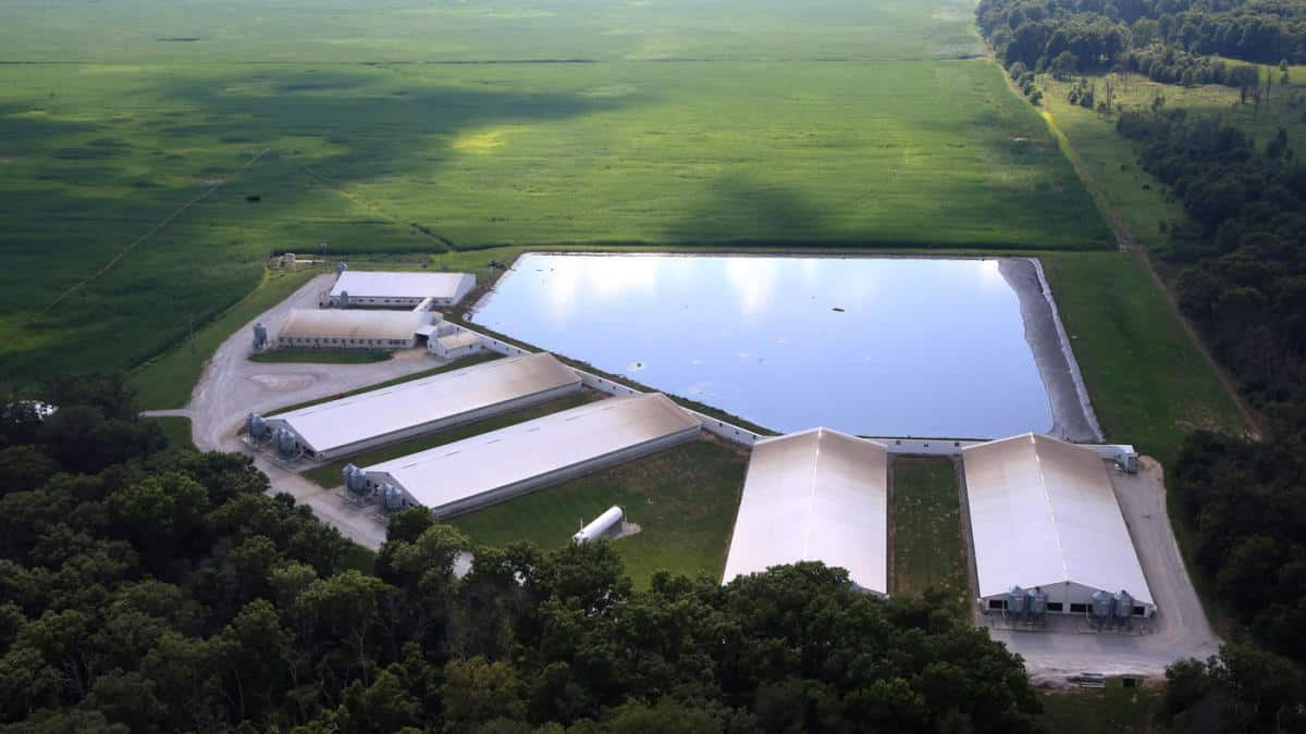 Smithfield Farms pledges to cover manure lagoons